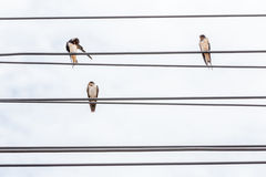 Three birds resting on electric cable lines and cloudy sky backg Stock Photos