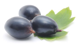 Three black barberries Stock Image