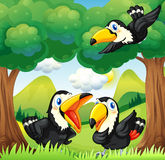 Three black birds at the forest. Illustration of the three black birds at the forest Royalty Free Stock Photography