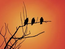 Three Black Birds Sitting Together On A Tree Branch With The Bright Orange Sky Behind Them royalty free illustration