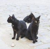 Three black cats on the street Royalty Free Stock Photos