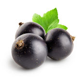 Three black currant with leaf Royalty Free Stock Images