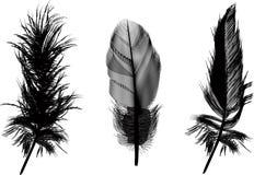 Three Black Feathers Illustration Stock Photo