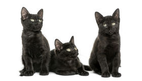 Three Black kittens looking away, 2 months old, isolated Stock Photo