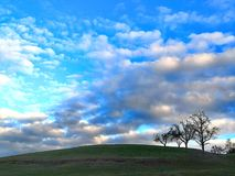 Three black trees under a vault of blue sky and clouds stock images