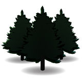 Three black and white spruce, and their shadows for advertising and announcements. Christmas symbol. New Year. On a Royalty Free Stock Photo