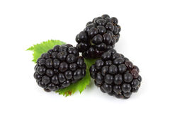 Three Blackberries. Three fresh blackberries isolated on white background Royalty Free Stock Photography