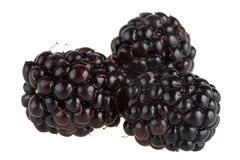 Three blackberries royalty free stock image