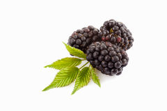 Three blackberries, leaves Royalty Free Stock Photo