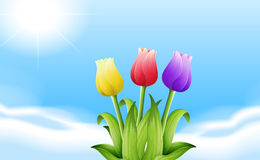 Three blooming flowers under the sunlight Stock Image