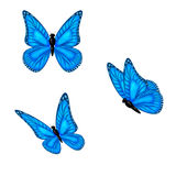 Three blue Butterflies Stock Images