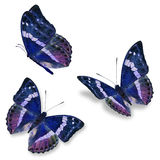 Three blue butterfly Royalty Free Stock Photography