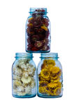 Three blue canning jars with strawflowers Stock Image