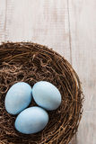 Three Blue Easter Eggs In a Nest. With room for text Royalty Free Stock Photography