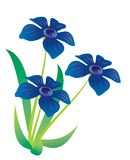 Three blue flowers. On stalks on a white background Royalty Free Stock Image