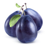 Three blue plums group  on white background Stock Image