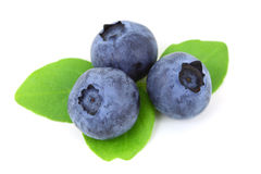 Three Blueberries. Fresh blueberry with leaves isolated on white background Stock Image
