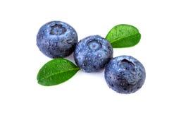 Three Blueberries green leaves diagonal composition. Three Blueberries green leaves over white, diagonal composition royalty free stock image