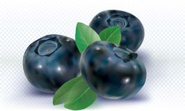 Three Blueberries and leaves Stock Photo