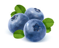 Three blueberry and leaves isolated on white background Stock Photos