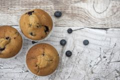 Three blueberry muffins with blueberries Royalty Free Stock Photos