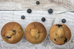 Three blueberry muffins with blueberries Stock Photography