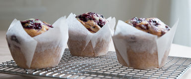 Three Blueberry Muffins Cooling On Wire Rack. Stock Photo