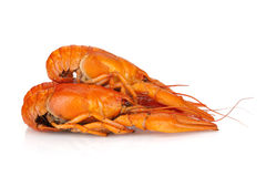 Three boiled crayfishes Royalty Free Stock Photos