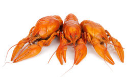 Three boiled crayfishes Stock Photo
