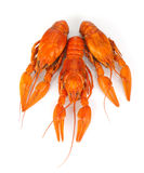 Three boiled crayfishes Royalty Free Stock Images
