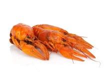 Three boiled crayfishes Stock Image