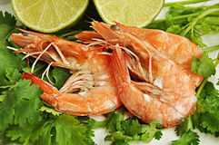 Three boiled prawns Stock Image
