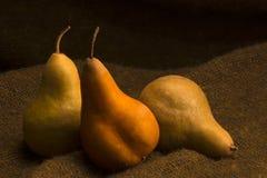 Three bosc pears Royalty Free Stock Photos