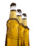 Three bottles of beer with water drops Stock Photography