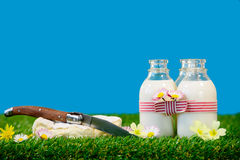 Three bottles with a cheese milk in the grass Royalty Free Stock Images