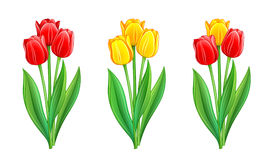 Three bouquets of red and yellow tulips Stock Images