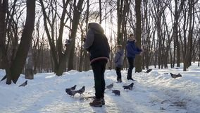 Three boys feed birds in winter park in slow motion. Three boys feed pigeons in winter park. Children spend leisure time outdoors at weekends. Slow mtoion stock video