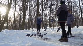 Three boys feed pigeons in winter park. Children spend leisure time outdoors at weekends stock video