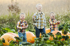 Three boys in pumpkin patch Royalty Free Stock Photo