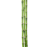 Three branches of bamboo Royalty Free Stock Photos