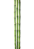 Three branches  of  Bamboo isolated on white background.  Sander`s Dracaena Royalty Free Stock Photos