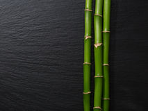 Three branches of bamboo. Royalty Free Stock Photo
