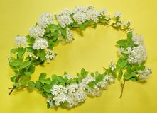 Three branches of blooming white spirea on a yellow background. Copy space for text or logo Stock Photos