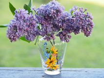 Delicate bouquet of lilac in a vase. royalty free stock image