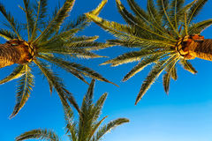 Three branches of palm Stock Photo
