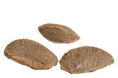 Three brazil nuts. On a white background Stock Image