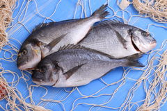 Three bream in fishing net on blue wooden background Stock Photos