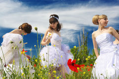 Three brides Stock Photography
