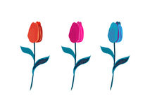 Three bright cartoon vector tulips, tulip flowers isolated on white background, tulips vector set, tulips color teaser. Tulips for decoration of greeting cards vector illustration