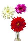 Three bright flowers. Gerbera Stock Photo